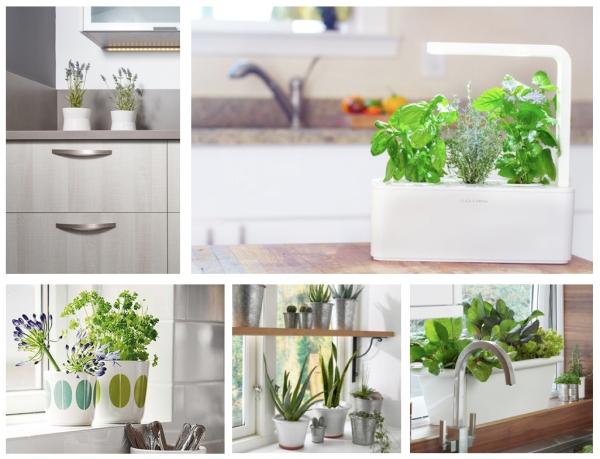 Plantas en la cocina plants in the kitchen viefe blog - Plantas en la cocina ...