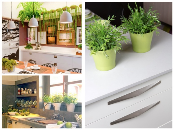 Plantas de cocina. Plants in the kitchen.